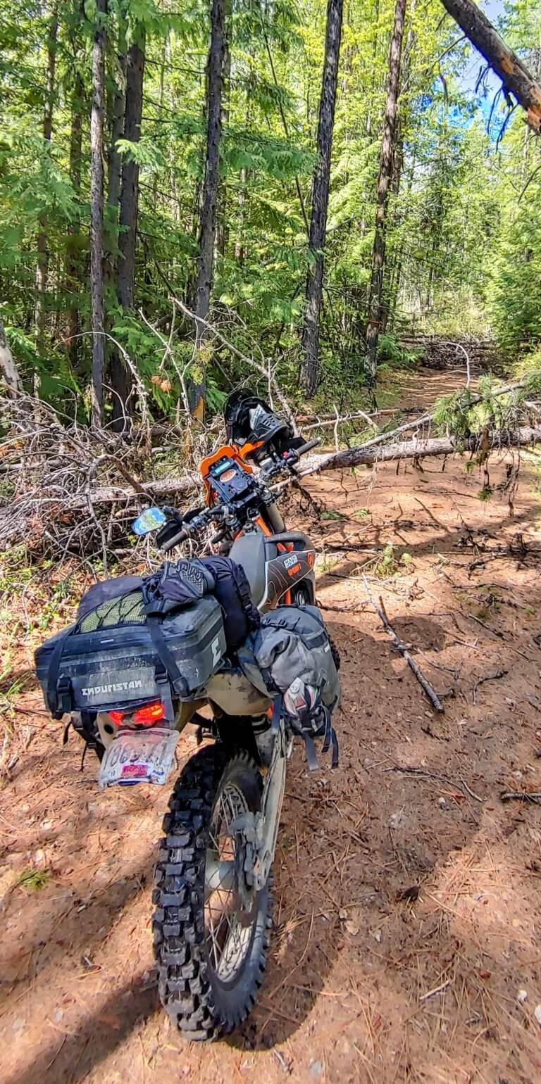 motorcycle stopped by fallen trees